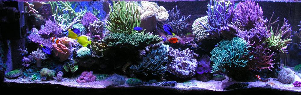 Самые красивые аквариумы мира фото